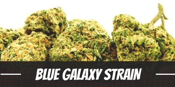 Blue Galaxy Strain