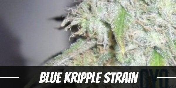 Blue Kripple Strain