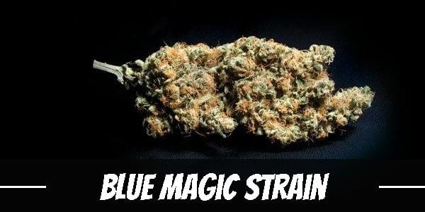 Blue Magic Strain