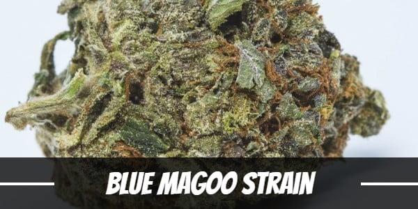 Blue Magoo Strain
