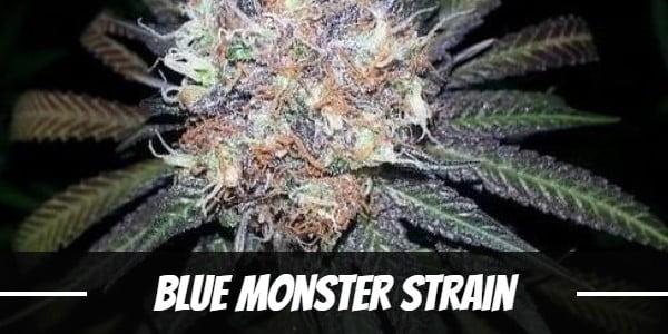 Blue Monster Strain