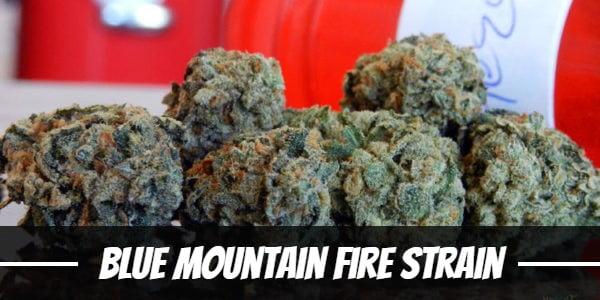 Blue Mountain Fire Strain