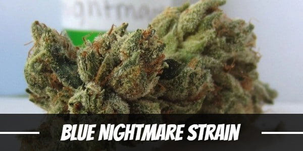 Blue Nightmare Strain