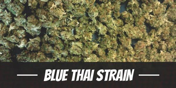 Blue Thai Strain