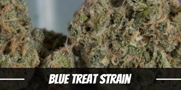 Blue Treat Strain