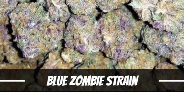 Blue Zombie Strain
