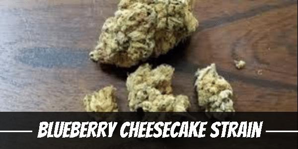 Blueberry Cheesecake Strain