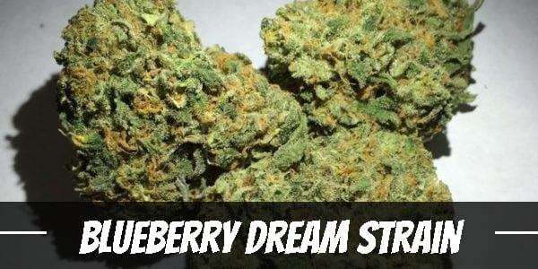Blueberry Dream Strain