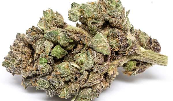 Blueberry Jack Strain Medical
