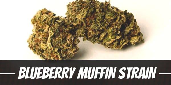 Blueberry Muffin Strain