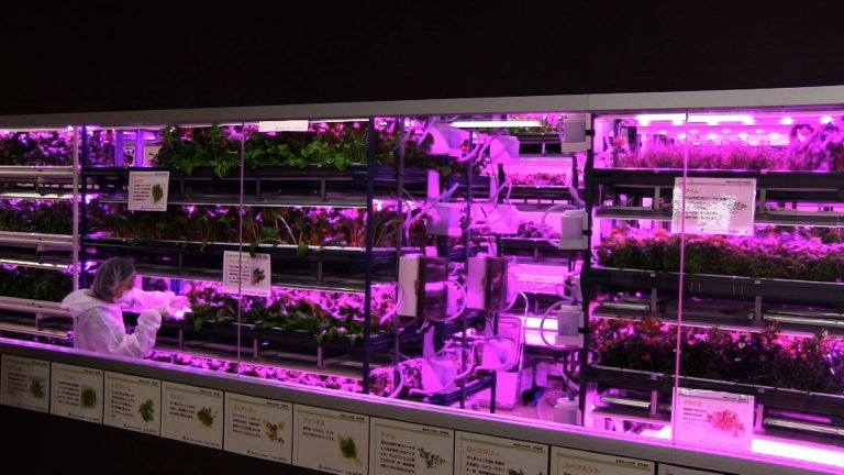 Blueprint to Indoor Gardening With LED Lights