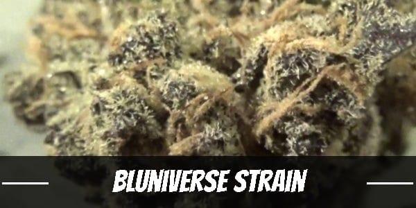 Bluniverse Strain