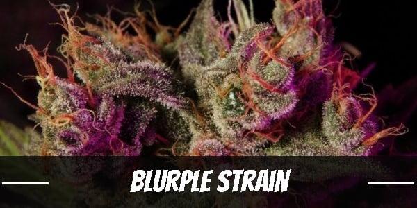 Blurple Strain