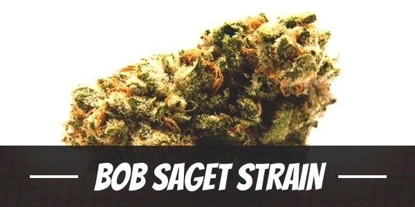 Bob Saget Strain