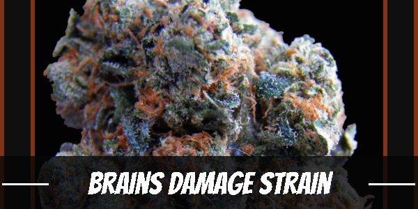 Brains Damage Strain