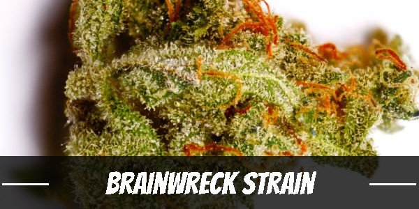 Brainwreck Strain