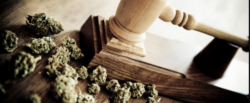 Breaking_Marijuana