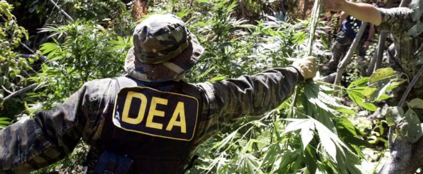 Breaking_Marijuana_Law
