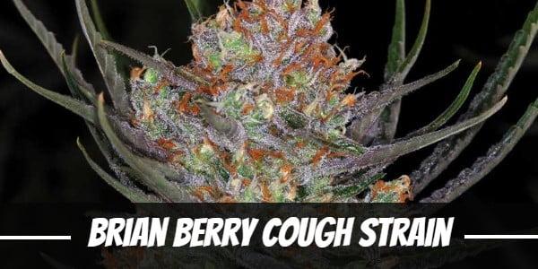 Brian Berry Cough Strain