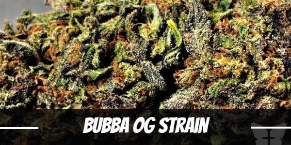 Bubba OG Strain