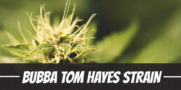 Bubba Tom Hayes Strain