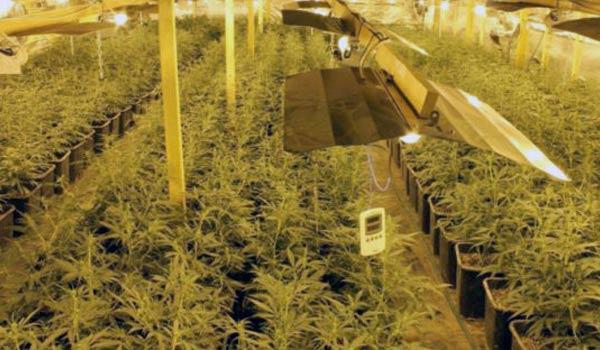 indoor marijuana grow system