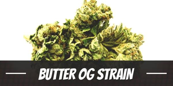 Butter OG Strain