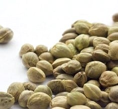 Buy quality marijuana seeds