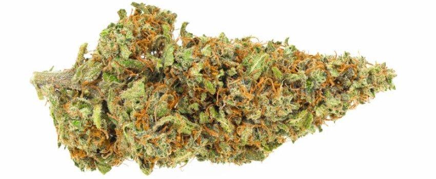 CBD Mango Haze Medical