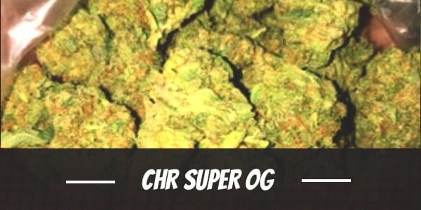 CHR Super OG