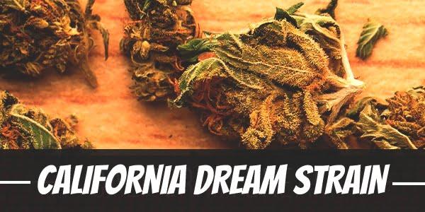 California Dream Strain