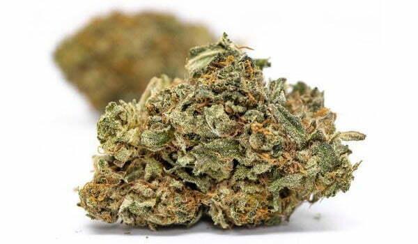 California Orange Strain Medical