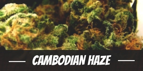 Cambodian Haze