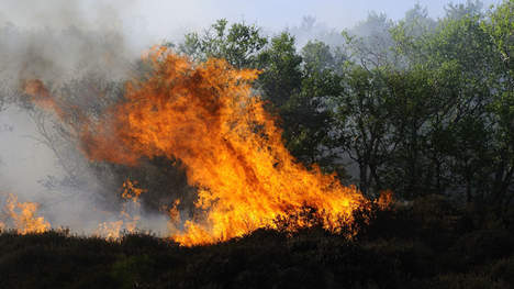 Can Burning cannabis Fields Get You High
