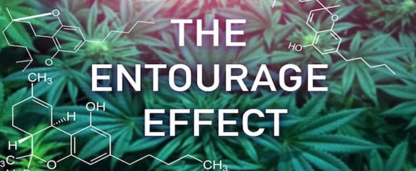 Cannabinoids and the Entourage Effect