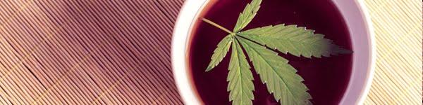 Cannabis Tea Recipe Guide