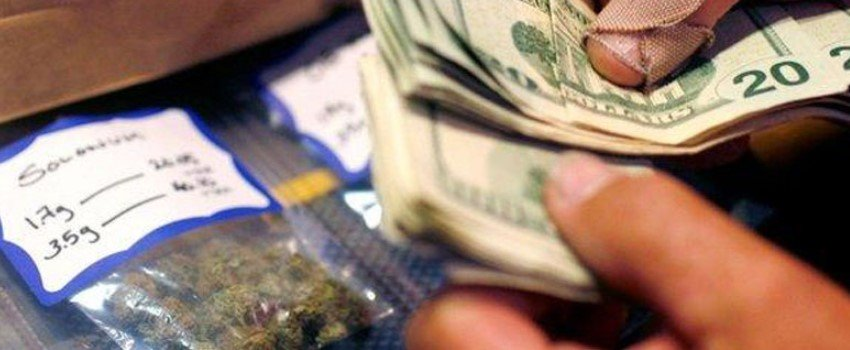 Cannabis cost to start a grower's supply