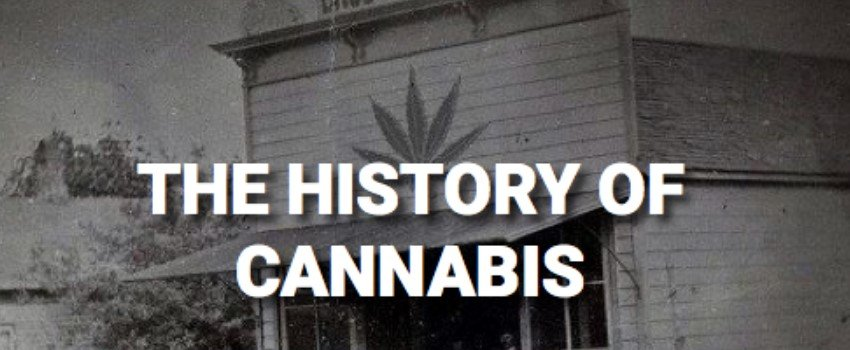 Cannabis history and market