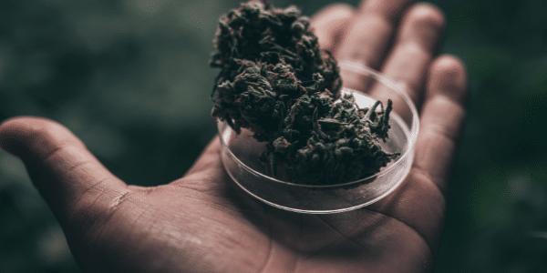 Cannabis-strain-effects