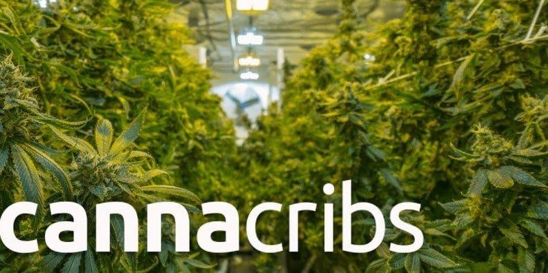 Cannacribs