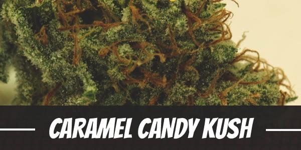 Caramel Candy Kush