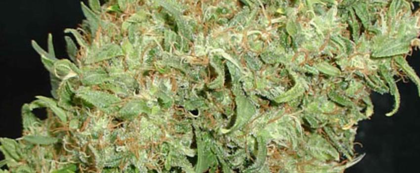 Caramella Medical