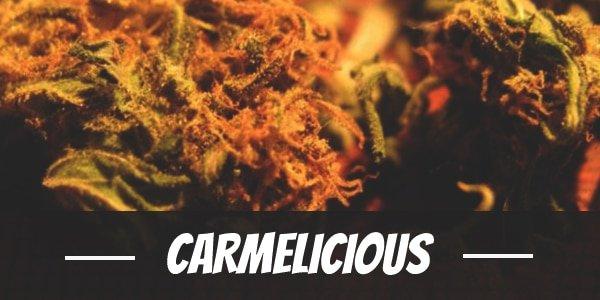 Carmelicious