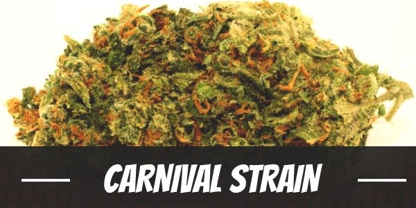 Carnival Strain