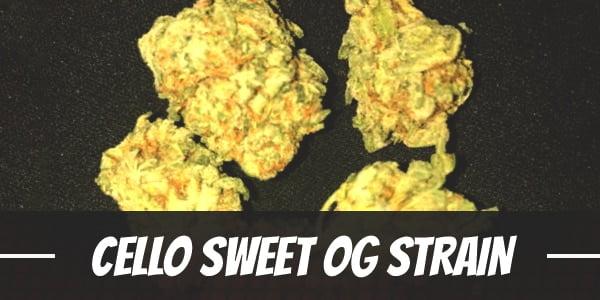 Cello Sweet OG Strain