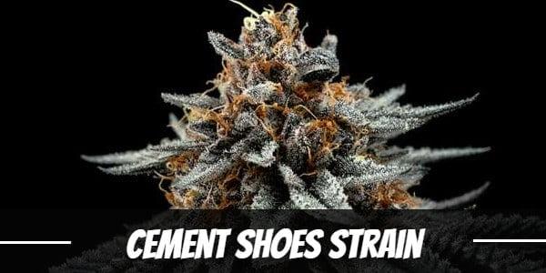 Cement Shoes Strain