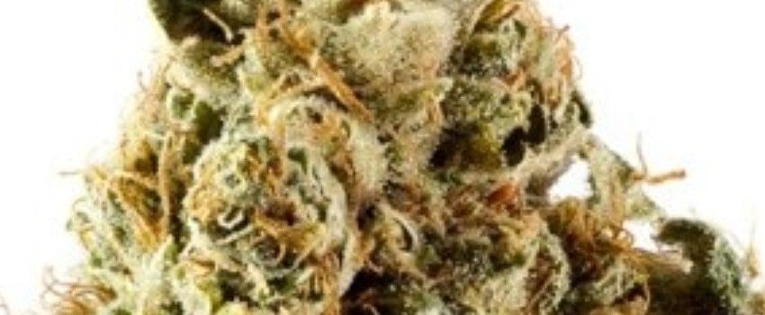 Cerebro Haze Adverse Reaction