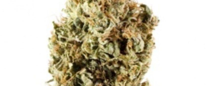 Cerebro Haze Medical