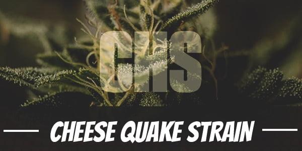 Cheese Quake Strain