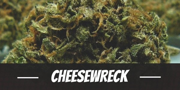 CheeseWreck